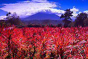 The Poas Volcano Rises Above The Central Valley Landscape Of Costa Rica.