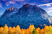 Fall aspen under Carson Peak, Inyo National Forest, Sierra Nevada Mountains, California