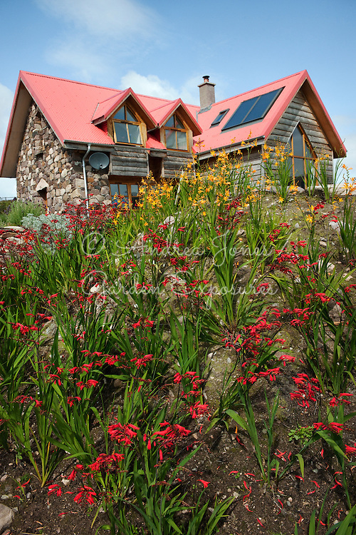 Raised border with Crocosmia varieties and house in background<br /> <br /> 2 Durnamuck, Little Loch Broom, Wester Ross, Scotland