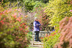 © Licensed to London News Pictures. 15/04/2014. Guildford, UK. A woman looks at flowers. People enjoy the afternoon  sunshine at Winkworth Arboretum in Surrey today 15th April 2014. Photo credit : Stephen Simpson/LNP
