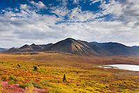 Tundra in the Ogilvie Mountains displaying vibrant autumn foliage, Tombstone Territorial Park Yukon Canada