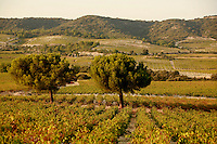 the vineyards of Tavel, Languedoc, France..October 4, 2007..Photo by Owen Franken for the NY Times.