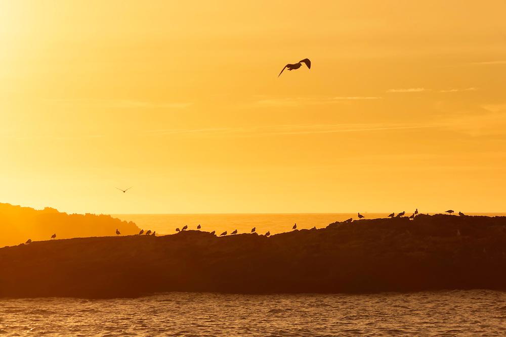 Seagulls on rocks during sunset.