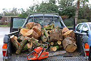 Sawing fallen trees and branches for firewood