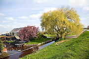 Weeping willow tree, canal, farmhouse, Maasluis, Netherlands