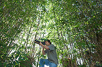 Photographer adjusts camera lens in bamboo forest low angle view