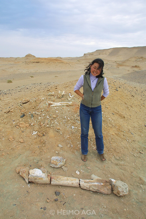 GOBI DESERT, MONGOLIA..08/27/2001.Bugiin Tsav. Site of finds of fossilized dinosaur remains. Presumed dino thigh bone..(Photo by Heimo Aga).
