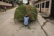 A man ties down a truck load of tall grass at his home in Santa Rosa de Copan, Honduras Oct 17, 2014.