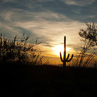 Saguaro National Park, Tucson. Sunset Saguaro silhouette.