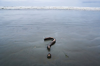 Driftwood in the shape of a question mark on a beach.