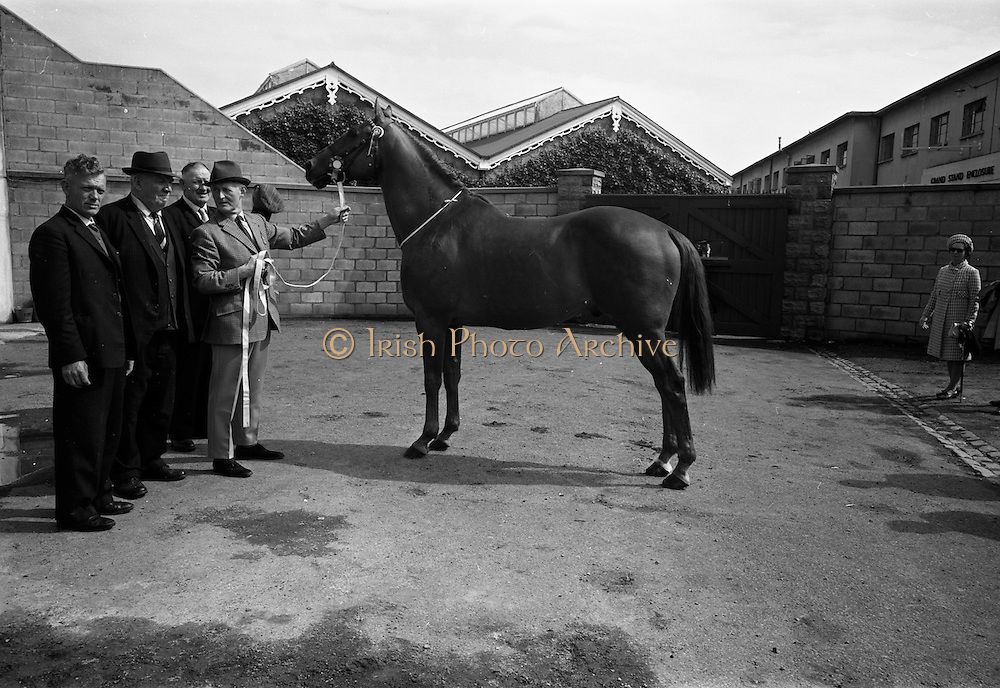 """08/08/1967<br /> 08/08/1967<br /> 08 August 1967<br /> R.D.S. Horse Show, Ballsbridge, Dublin. Winner of the Croker Perpetual Challenge Cup for best weight-carrying thoroughbred stallion, """"Autumn Gold"""", 16 years old, property of James Corbett, Carrahan, Ennis, Co. Clare."""