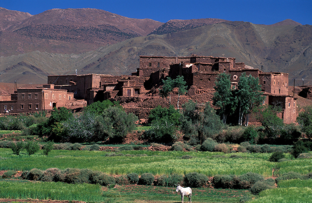 Horse and Village Telouet with High Atlas, Morocco, North Africa