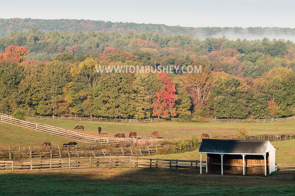 Mount Hope, New York - Horses graze in farm fields on the morning of Oct. 8, 2015.
