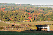 Mount Hope, New York - Horses graze in farm fields on the morning of Oct. 8, 2015.