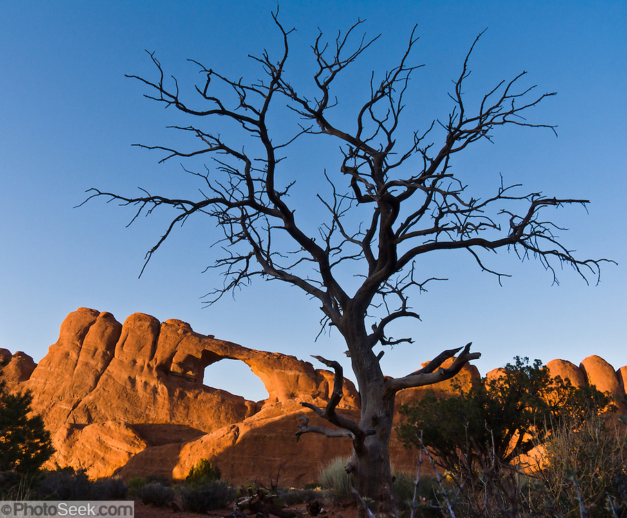 """Skyline Arch eroded within the Slick Rock member of Entrada Sandstone in Arches National Park, Utah, USA. Fractal branching of a twisted dead tree frames the arch. Published in """"Light Travel: Photography on the Go"""" by Tom Dempsey 2009, 2010."""