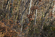 close up of trees during late autumn season