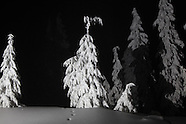 Mount Hood Trees