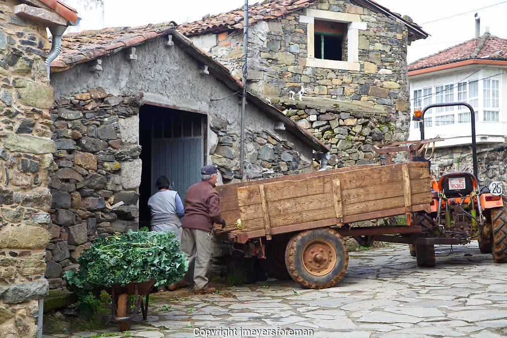 A farmer in Galica Spain, bringing in the harvest