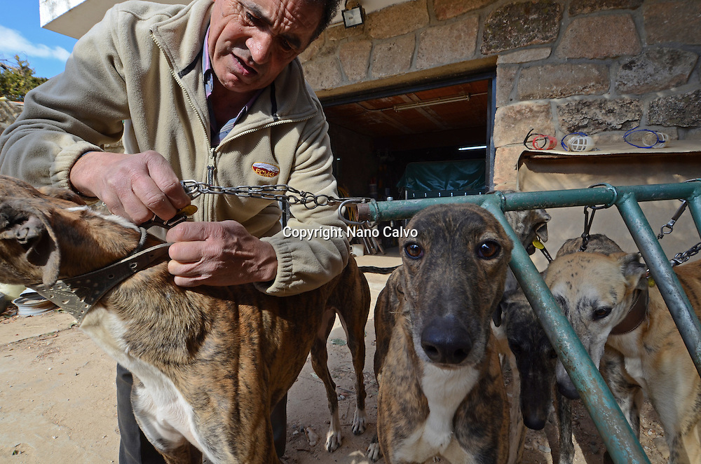 Inside the house of Eugenio, a honest and respectful Galguero - Spanish term for greyhound owners -. He owns 10 greyhounds, including two old specimens and an injured one. Among his inventions, a bicycle for training various dogs at the same time and a machine for racing out of hunting season, created with a fake pray and a powerful motor.
