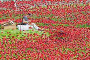 Blood Swept Lands and seas of red by Paul Cummins. Last minute preparations before the official opening tomorrow. Ceramic poppies form an artwork in the moat of the Tower of London to mark the centenary of the first world war. 04 Aug 2014.