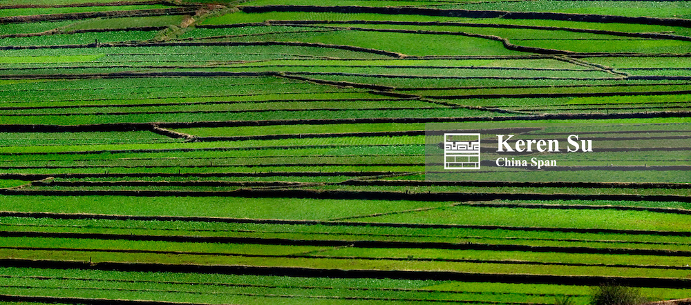 Landscape of green winter wheat lands, North Yunnan, China