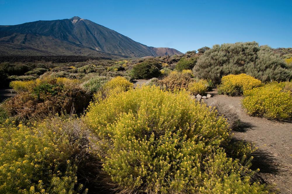 Teide mountain in spring, Teide National Park, Tenerife Island, Canary Islands, Spain.