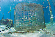 Metal cage on the bottom of the Lake Worth Lagoon used to hold live bait for use in sportfishing.