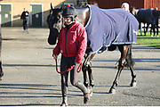 NUBE NEGRA, trained by Dan Skelton and one of the pre-race favourites for the Scottish Champion Hurdle having an early moning leg stretch before the Scottish Grand National race day at Ayr Racecourse, Ayr, Scotland on 13 April 2019.