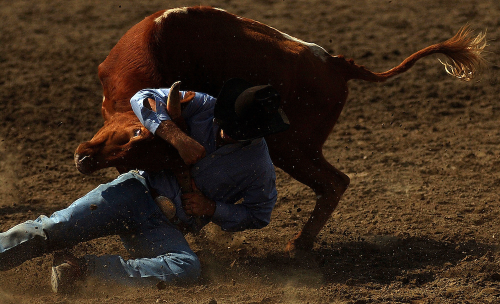 OMAK, WA - AUGUST 15:  Dusty Kimble, of Wilson Creek, Oregon, wrestles a steer to the ground during the Omak Stampede August 15, 2004 in Omak, Wash.