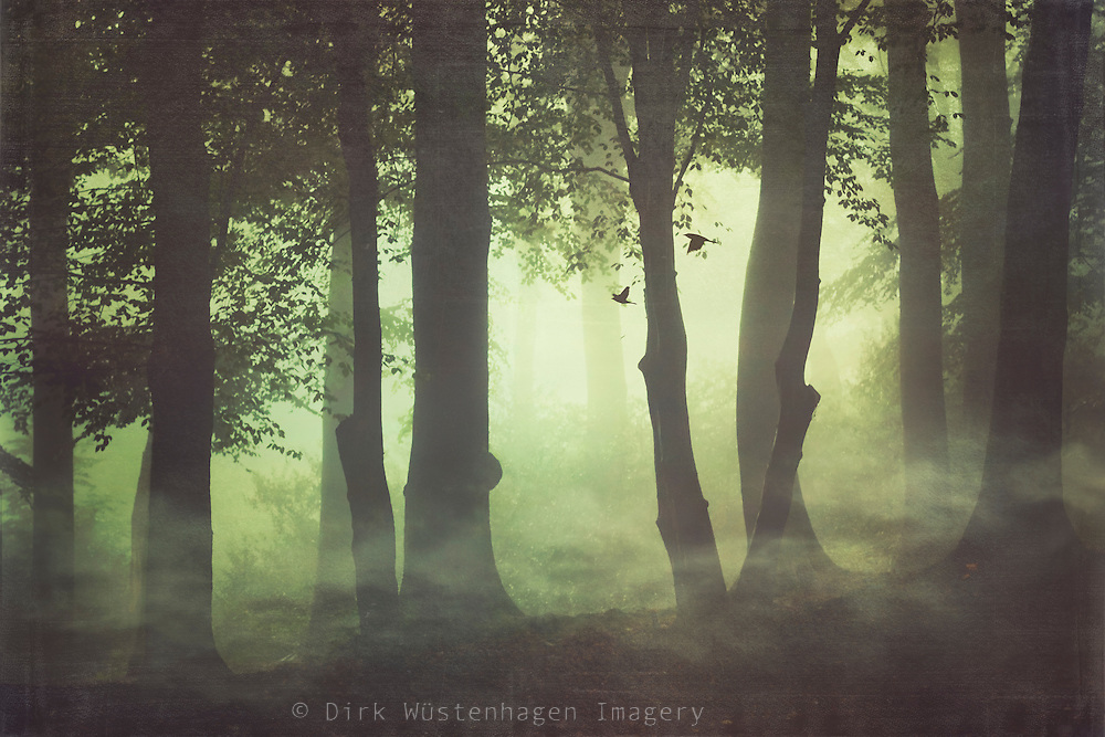 Forest in misty morning light<br />