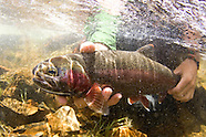 California Fly Fishing Photos - Stock images