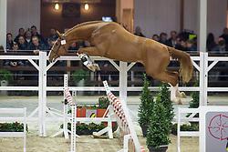 079, Interadel BH<br /> BWP Hengsten keuring Koningshooikt 2015<br /> © Hippo Foto - Dirk Caremans<br /> 21/01/16