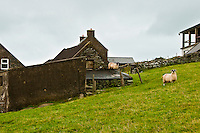 Landscape, Farmhouse with Sheep.<br />