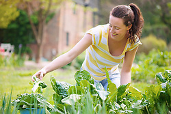 Young Woman Picking Spinach in Garden