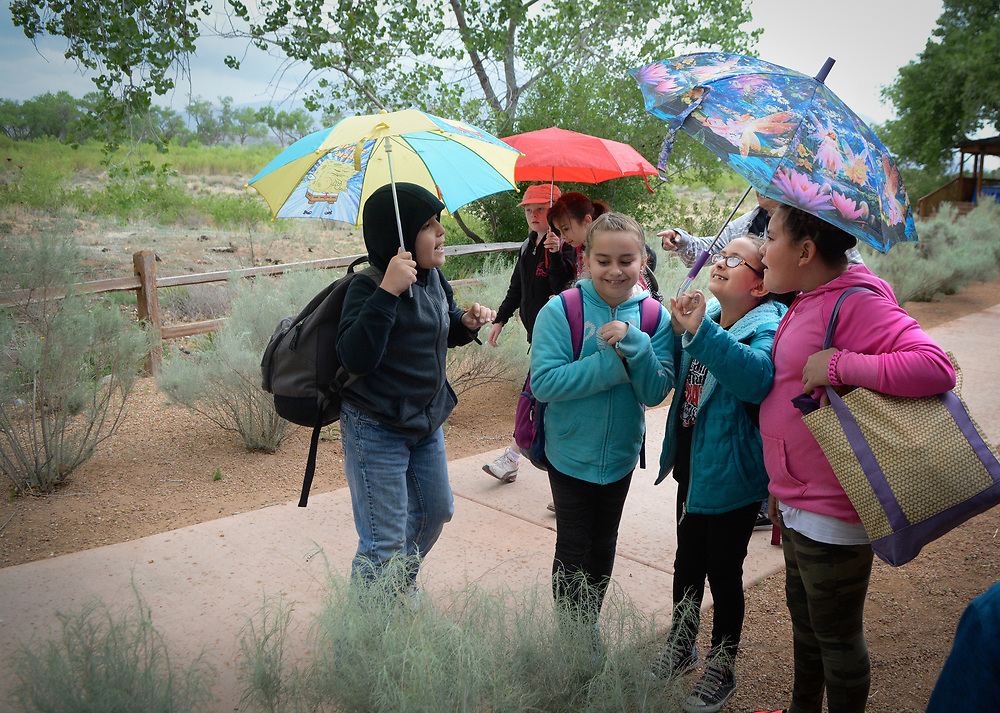 mkb050617f/metro/Marla Brose --  A group of Bernalillo Elementary students, including, from right, Jovanna Gurule, Kianna Lopez and Sofia Lepre share umbrellas as they make their way to the Rio Grande to release a varieties of minnows that they raised in their classrooms, Tuesday, May 9, 2017, at the Hyatt Regency Tamaya Resort in Bernalillo, N.M. (Marla Brose/Albuquerque Journal)