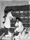 1957 Poultry Special at Ballyhaise Agricultural College