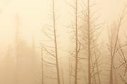 Trees and fog at sunrise at Lyons Lake.<br />Whiteshell Provincial Park<br />Manitoba<br />Canada