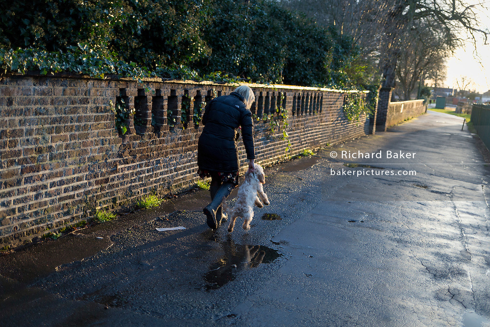 A dog walker struggles to control an excitable Cockapoo puppy, on 28th February 2017, in Ruskin Park, London borough of Lambeth, England. A Cockapoo is a mixed-breed dog that is the cross between either Cocker Spaniel and a poodle - a mixed breed that has become very popular recently in the UK.