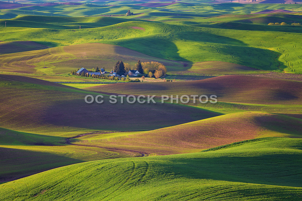 Picture Perfect Palouse Washington
