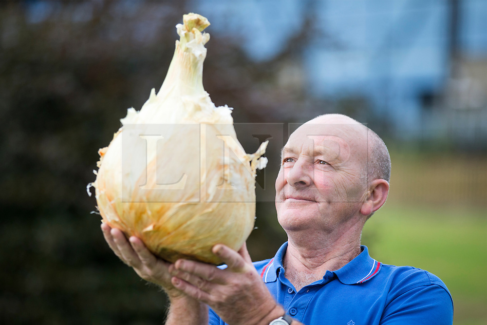 © Licensed to London News Pictures. 16/09/2016. Harrogate UK. Picture shows Joe Atherton & his first prize winning onion that weighed 15.10 kg at the Giant vegetable competition in Harrogate. The competition see's competitors from across the UK show their biggest Carrot's, Cucumbers, Cabbages, Onion's & Tomatoes competing for the title of heaviest & longest at the Harrogate Autumn Flower Show. Photo credit: Andrew McCaren/LNP