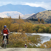 Michael Whelan in action during the New World Tour de Wakatipu bike race on Saturday. Six hundred and ninety people entered the bike race which featured an  exclusive course with breathtaking views from Millbrook Resort in Arrowtown to Chard Farm along the Kawarau River, via the trails and tracks of the Wakatipu basin with distances of 36 kilometres fun riding for recreational bikers and 45 kilometres for elite and sport racers. The event was part of the inaugural Queenstown Bike Festival, which took place from 16th-25th April. The event hopes to highlight Queenstown's growing profile as one of the three leading biking centres in the world. Queenstown, Central Otago, New Zealand. 23rd April 2011. Photo Tim Clayton..