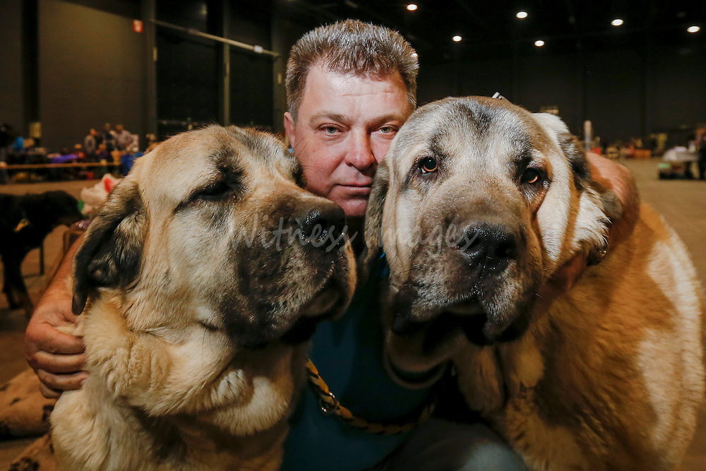 A man poses with his two Spanish Mastiff at the 50th Euro Dog Show in Kortrijk, Belgium, 16 November 2013.