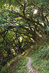 """Mill Creek Trail"" - Photograph of the Mill Creek Trail in Big Sur, California."