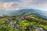 Sunrise in the Roan Highlands as seen from Grassy Ridge.  Spring green grasses and flowering Catawba Rhododendron decorate the lush, high-elevation landscape.