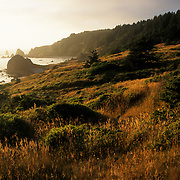 The rocky, picturesque, southern Oregon coast in the Pacific Northwest, USA, is illuminated by the setting sun. In the distance, large rocks jut from the ocean and hills are covered in grasses and trees.