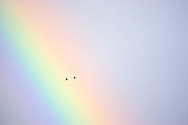 Garganeys, pair flying across rainbow-lit sky<br /> <br /> Tel: 0161 483 6311 Email: benhall@wildimages.demon.co.uk