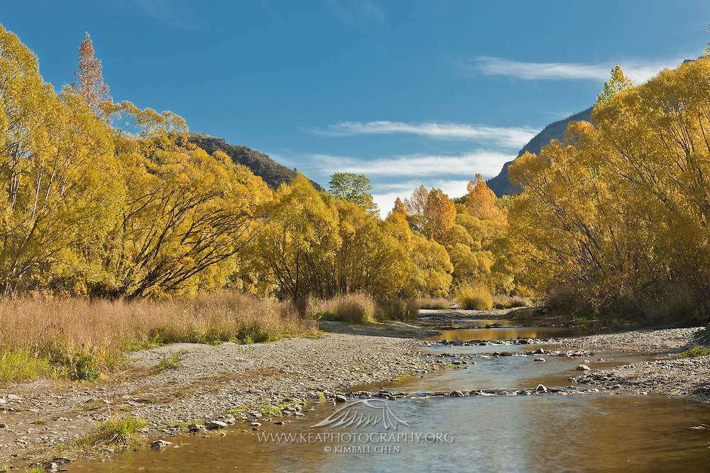 Autumn colors along the banks of Arrow River, Arrowtown, New Zealand.