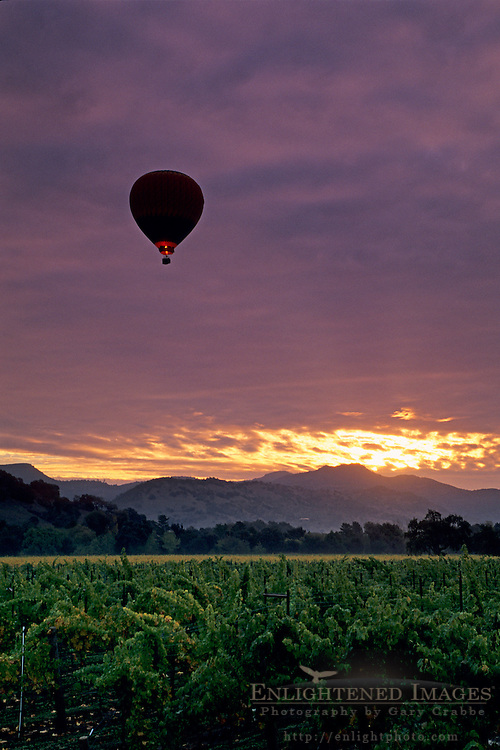 Hot air balloon over vineyards at sunrise, near Yountville, Napa Valley, Napa County, California