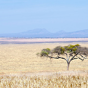 Looking across the swamp plains at Tarangire National Park in northern Tanzania not far from Ngorongoro Crater and the Serengeti.