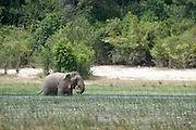 Elephant feeding at Wilpattu National Park.